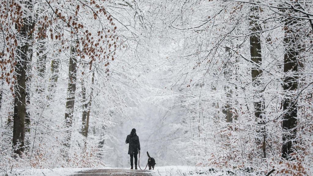 27.02.2020, Baden-Württemberg, Wolfschlugen: Ein Mann läuft mit seinem Hund durch einen verschneiten Wald. Foto: Christoph Schmidt/dpa +++ dpa-Bildfunk +++