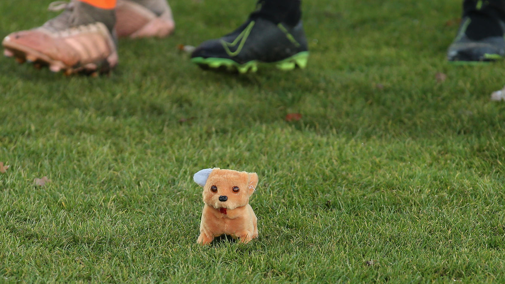 Hundestofftier auf dem Rasen