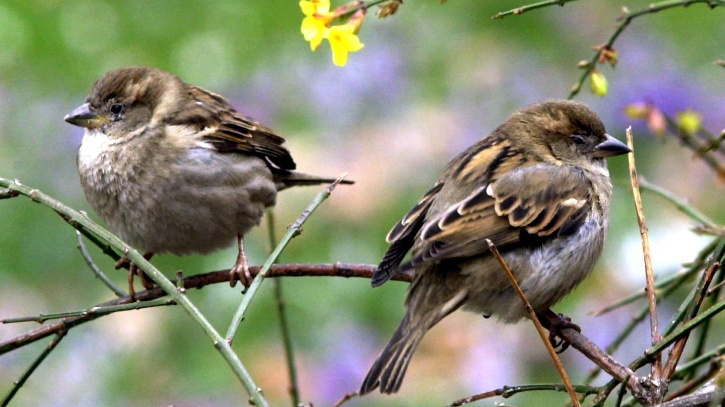 Vögel passen sich schon dem Klimawandel an und werden nicht mehr so groß.