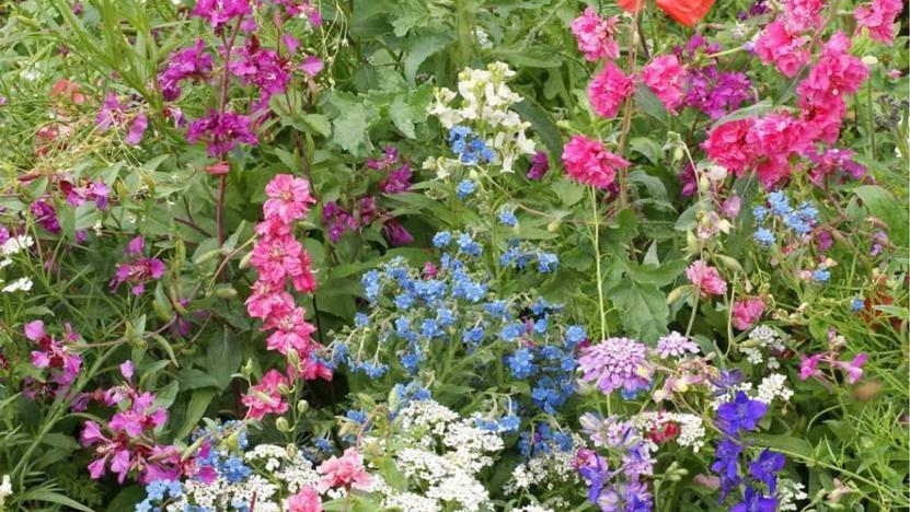 Wildblumen von Saflax.