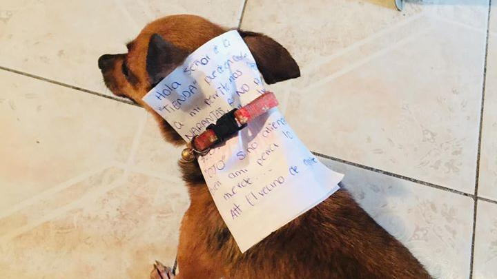Mexikaner schickt seinen Hund einkaufen.