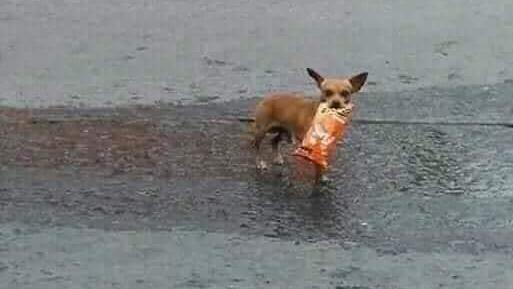 Der Hund kam mit dem Snack zu seinem Herrchen zurück.