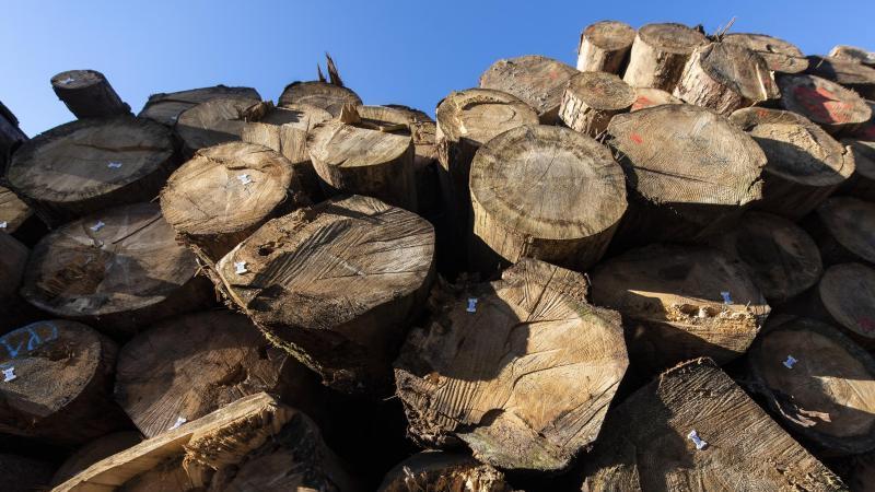 Holzstämme liegen in einem Holzlager des Forstes übereinander. Foto: Patrick Seeger/dpa/Symbolbild