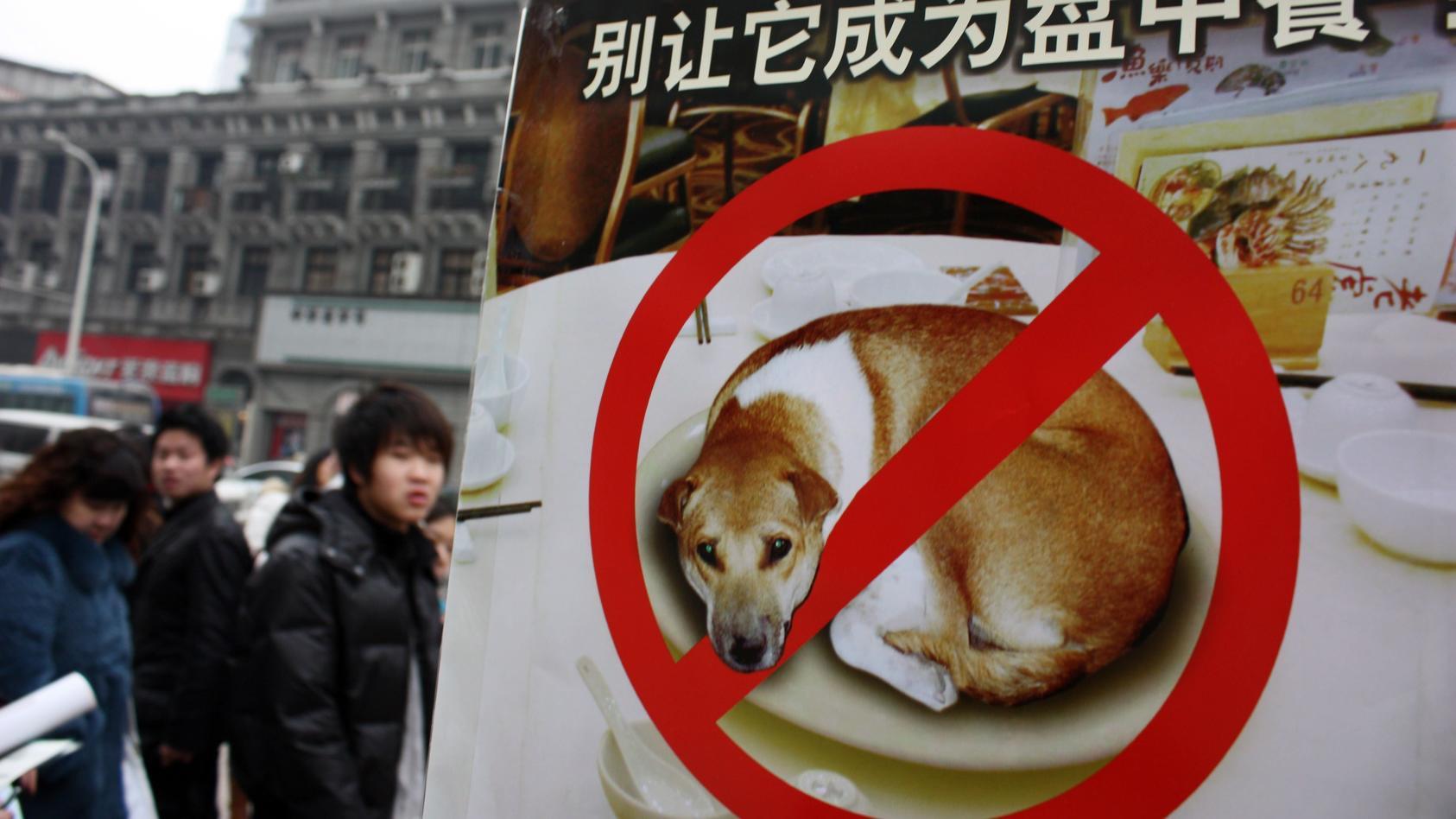 """""""Kein Hunde und Katzen essen!"""" - Auch in Wuhan wird dafür demonstriert."""
