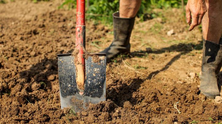 Frühjahrsarbeiten: Je nach Bodenbeschaffenheit, können die Beete umgegraben einen Spatenstich tief werden