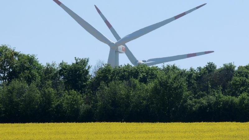 Windräder stehen hinter einem Wäldchen und einem blühenden Rapsfeld. Foto: Roland Holschneider/dpa