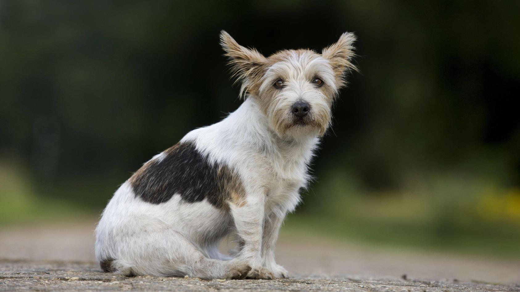 Auch Hunde können in die Pubertät kommen.