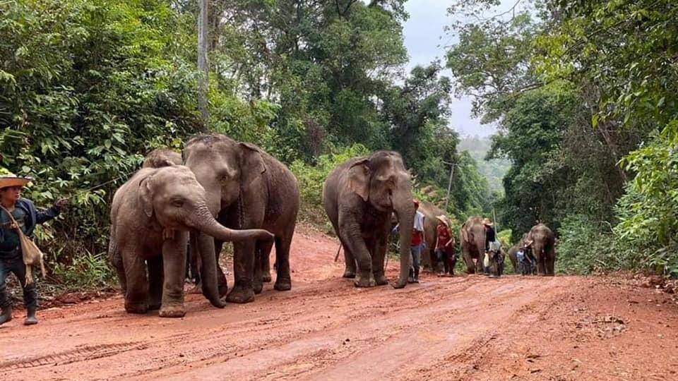 Hunderte Elefanten und ihre Besitzer haben durch das Wegbleiben der Touristen ihren Job verloren und kehren jetzt in ihre Heimatdörfer zurück.