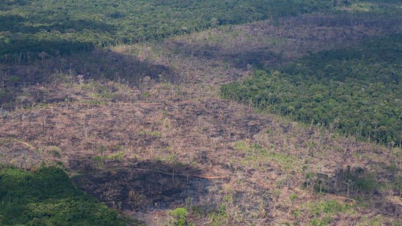 Abgeholzte Fläche im Amazonas-Regenwald. Foto: Chico Batata/Greenpeace/dpa