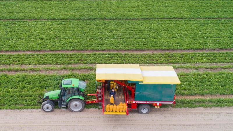 Ein Landwirt erntet mit einem Kartoffelroder Frühkartoffeln auf einem Feld. Foto: Julian Stratenschulte/dpa/Symbolbild