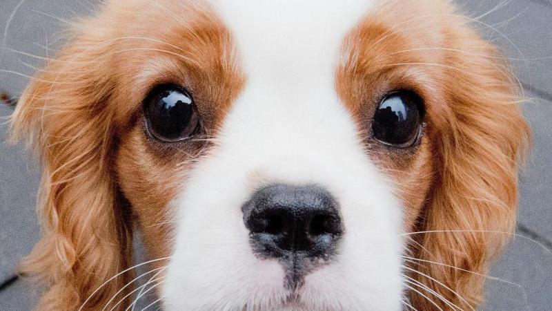 Ursachen für das Abnehmen bei Hunden