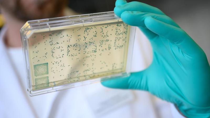 Ein Träger mit Bakterien. Foto: Sebastian Gollnow/dpa/Archivbild