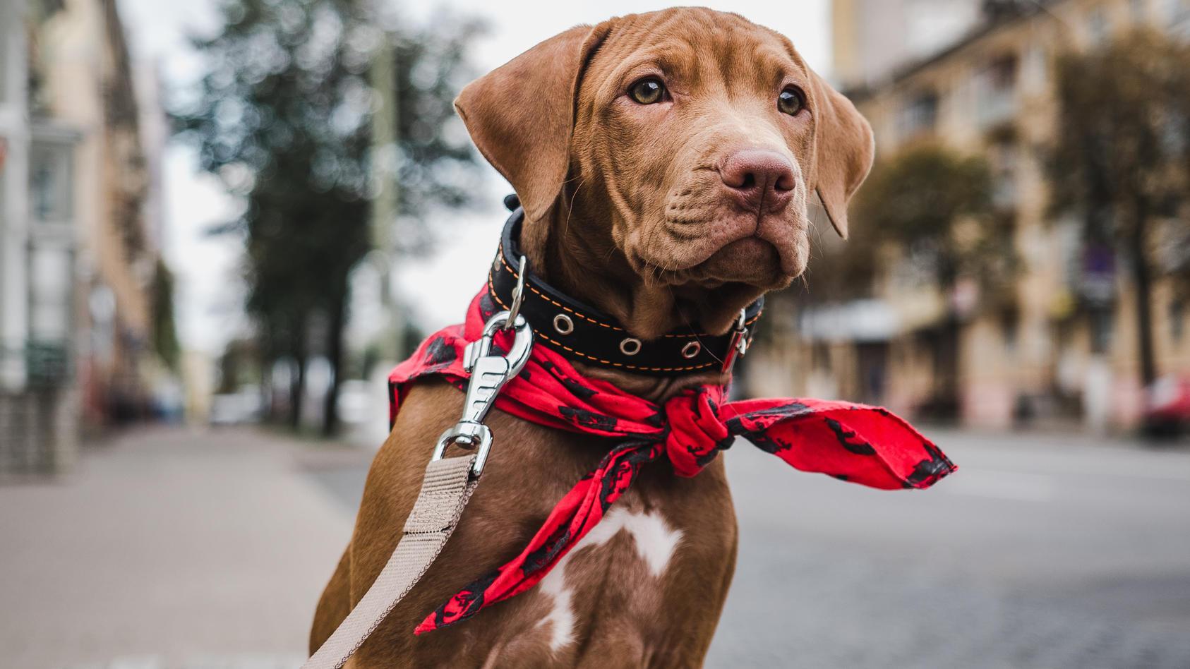 Eine bestimmte Hundeleine, die bei Fressnapf verkauft wurde, enthält Chrom VI.