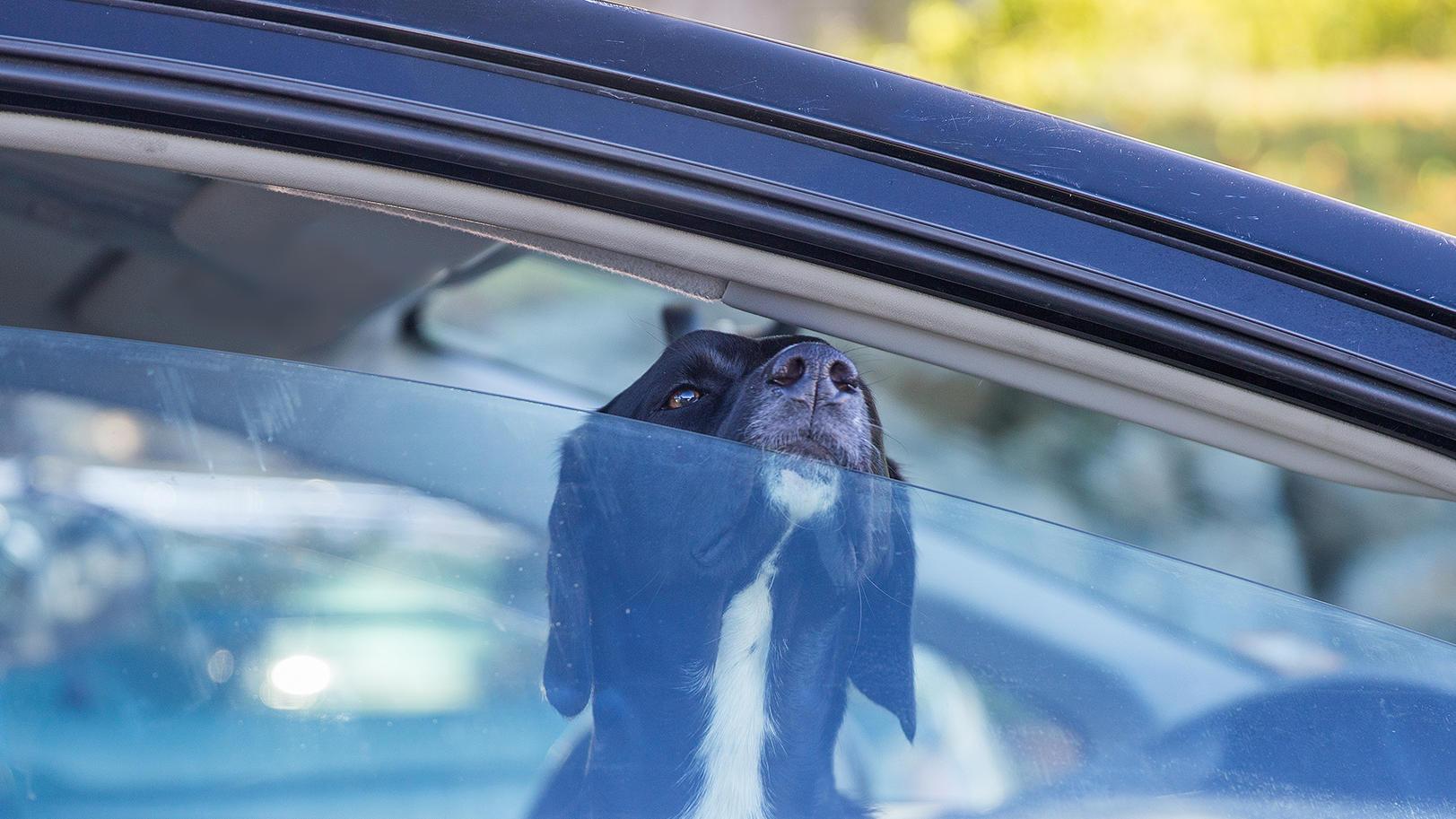 In Gerolzhofen wurde ein Hund über zwei Stunden in einem aufgeheizten Pkw zurückgelassen.