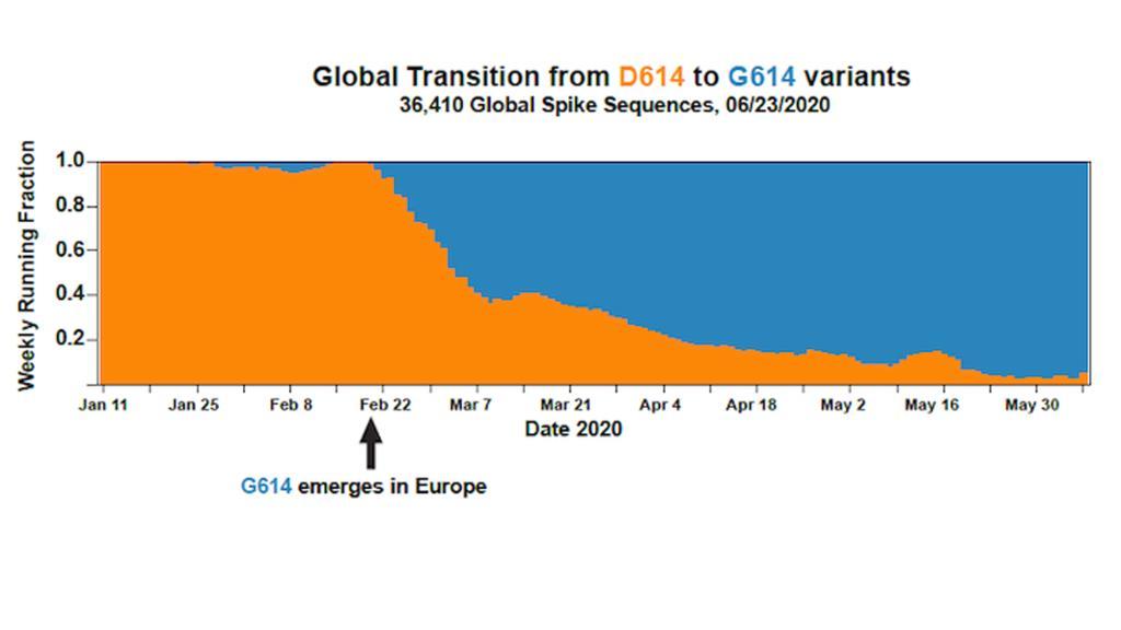 Der Anteil der ursprünglichen Corona-Form (orange) und der G614-Mutation (blau) weltweit im Lauf der Zeit.