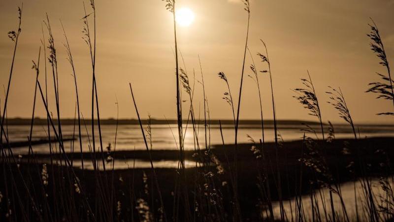 Die aufgehende Sonne scheint auf Pflanzenhalme auf der Nordseeinsel Norderney. Foto: Mohssen Assanimoghaddam/dpa/Symbolbild