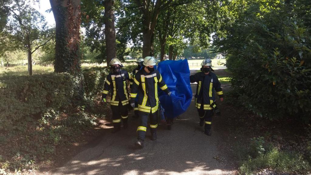 Auf einer blauen Abdeckplane brachten die Feuerwehrmänner das Tier in den Wald zurück.