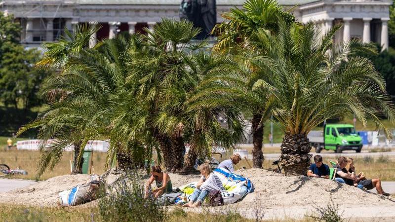 Mini-Oase aus ganz viel Sand mit 13 Palmen und 30 Liegen auf einem Teil der Theresienwiese. Foto: Peter Kneffel/dpa