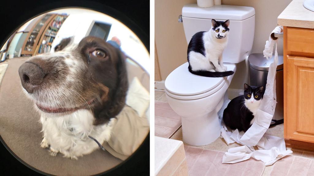 Hund & Katz: Zwei Einsendungen für den Pet Comedy Award 2020