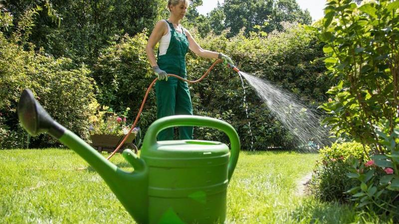 An heißen Tagen wässert man Pflanzen idealerweise morgens oder abends, also wenn es etwas kühler ist. Foto: Christin Klose/dpa-tmn