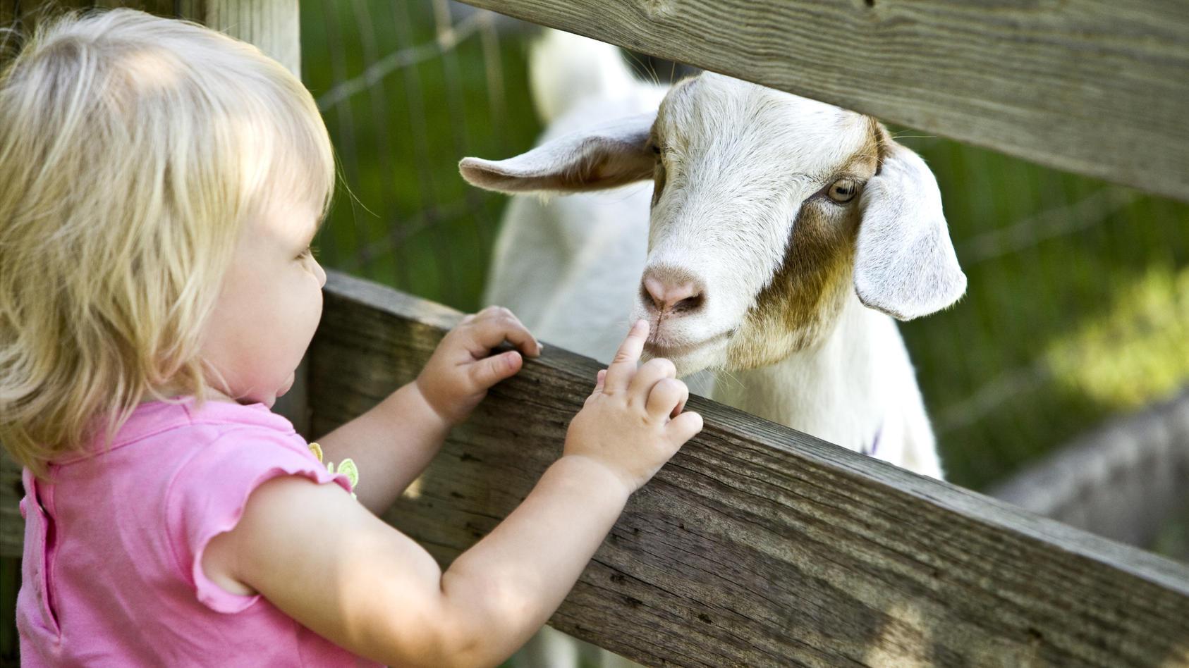 Damit der Ausflug in den Streichelzoo Tier und Mensch Spaß macht, sollten Eltern einige Tipps beherzigen.