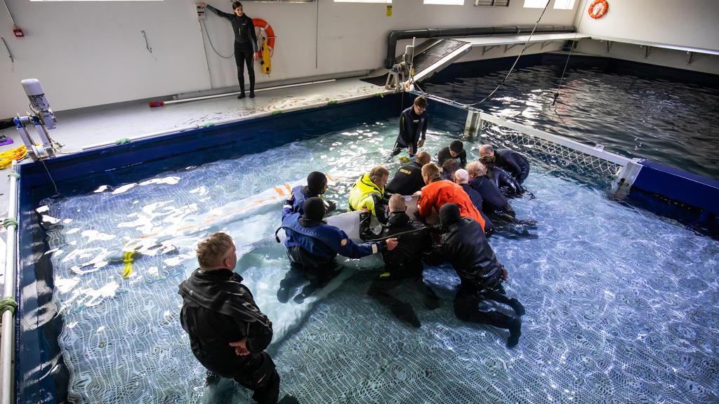 """10.08.2020, Island, Westman Islands: Mitarbeiter der Umweltorganisation """"Sea Life Trust"""" machen einen Belugawal für einen Umzug in ein neues Freiwasserschutzgebiet fertig. Zwei Beluga-Wale mit den Namen Kleiner Grauwal und Kleiner Weißwal werden in d"""