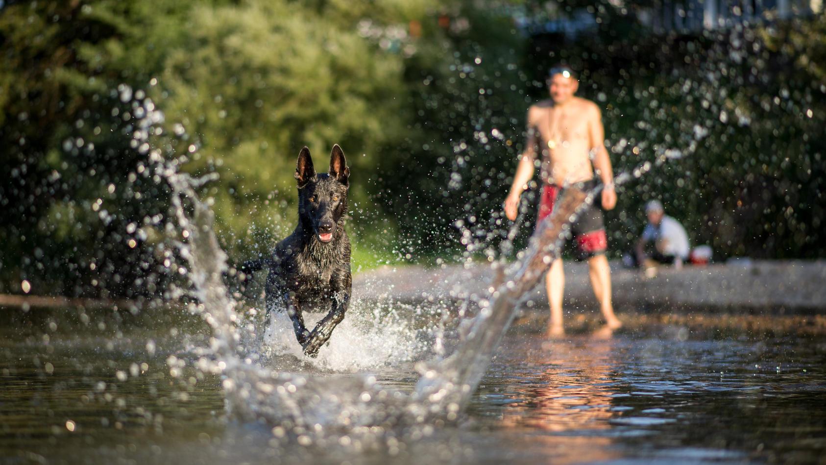 Wenn Hunde in verdächtigen Gewässern schwimmen, sollten die Besitzer alarmiert sein.