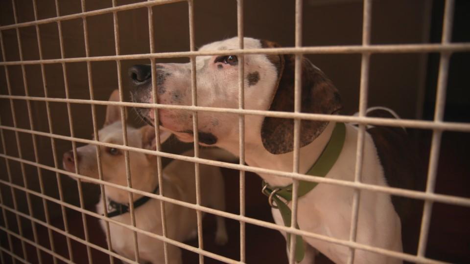 Hunde brauchen Auslauf! Das soll jetzt auch in einer neuen Hundeverordnung des Bundeslandwirtschaftsministeriums festgeschrieben werden.