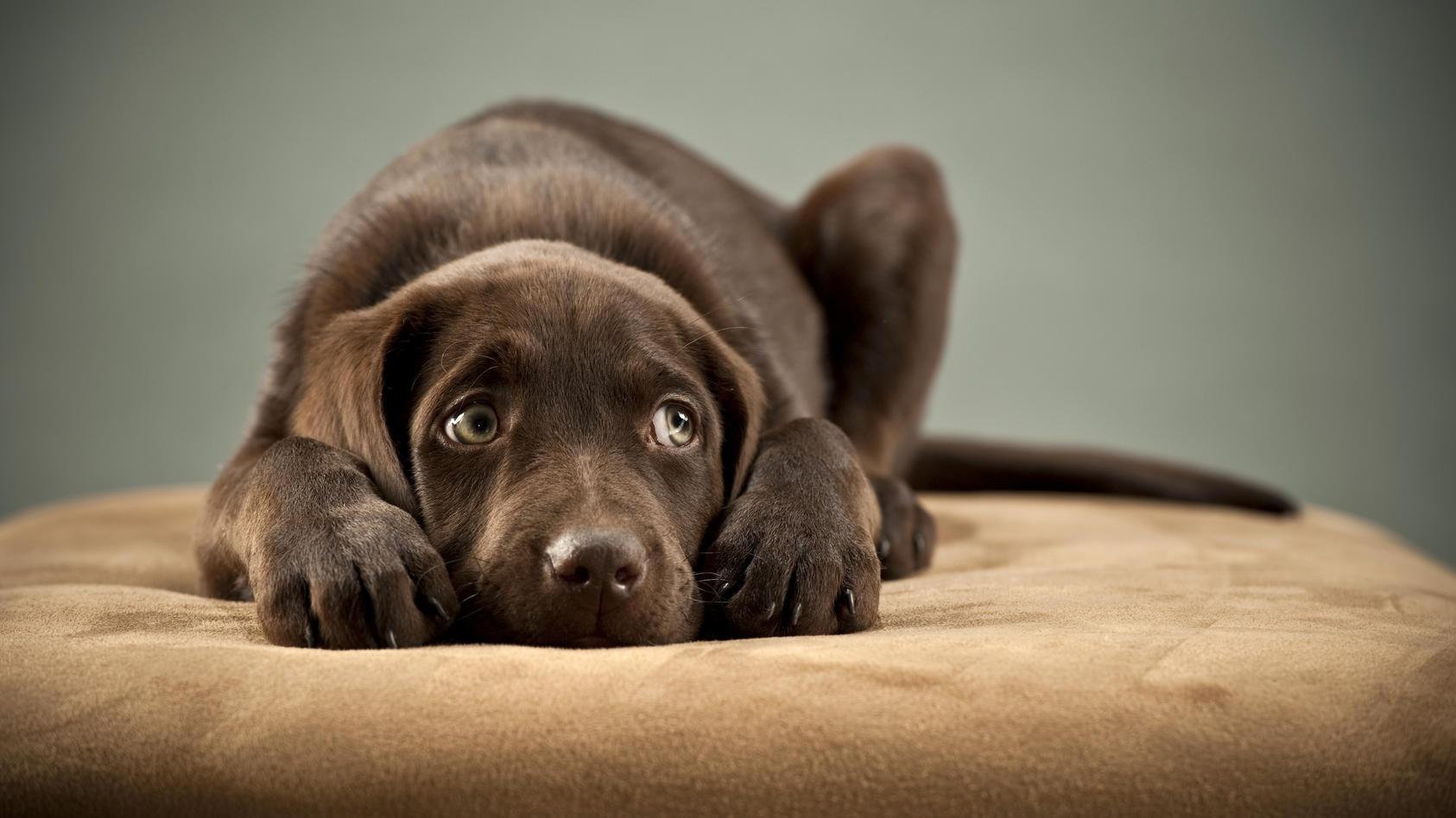Hund haben oft Angst bei lauten Geräuschen wie Feuerwerken oder Sirenen.