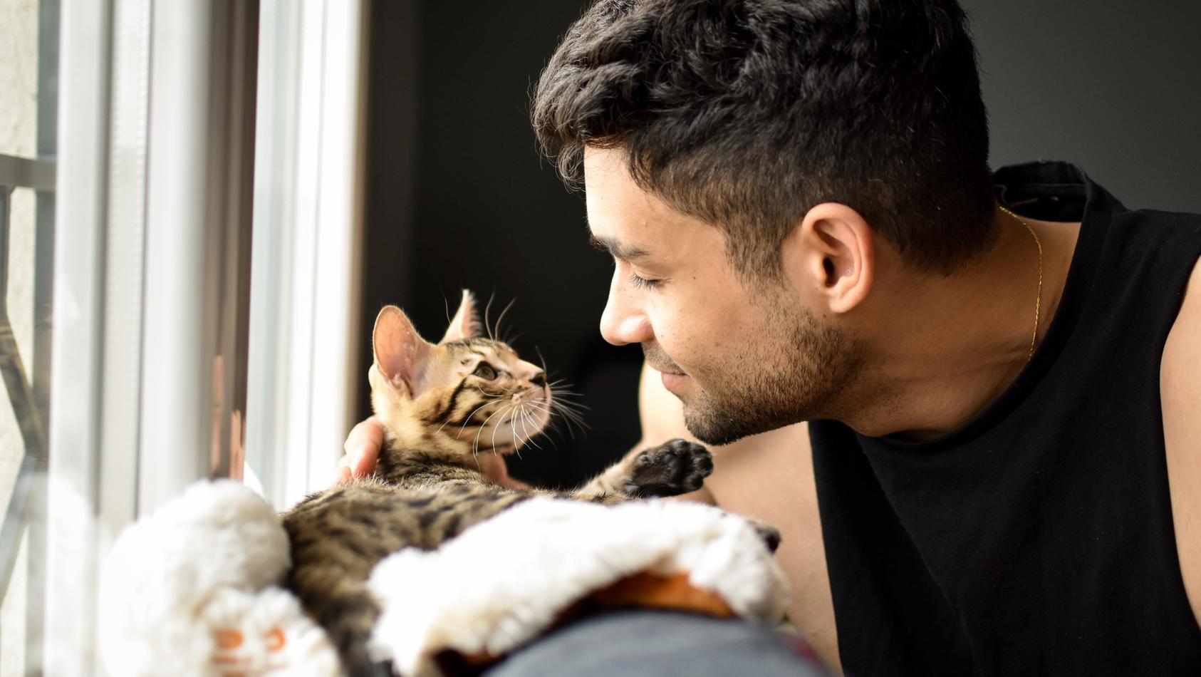 Ihre Katze gurrt wie eine Taube? Das könnte es bedeuten!