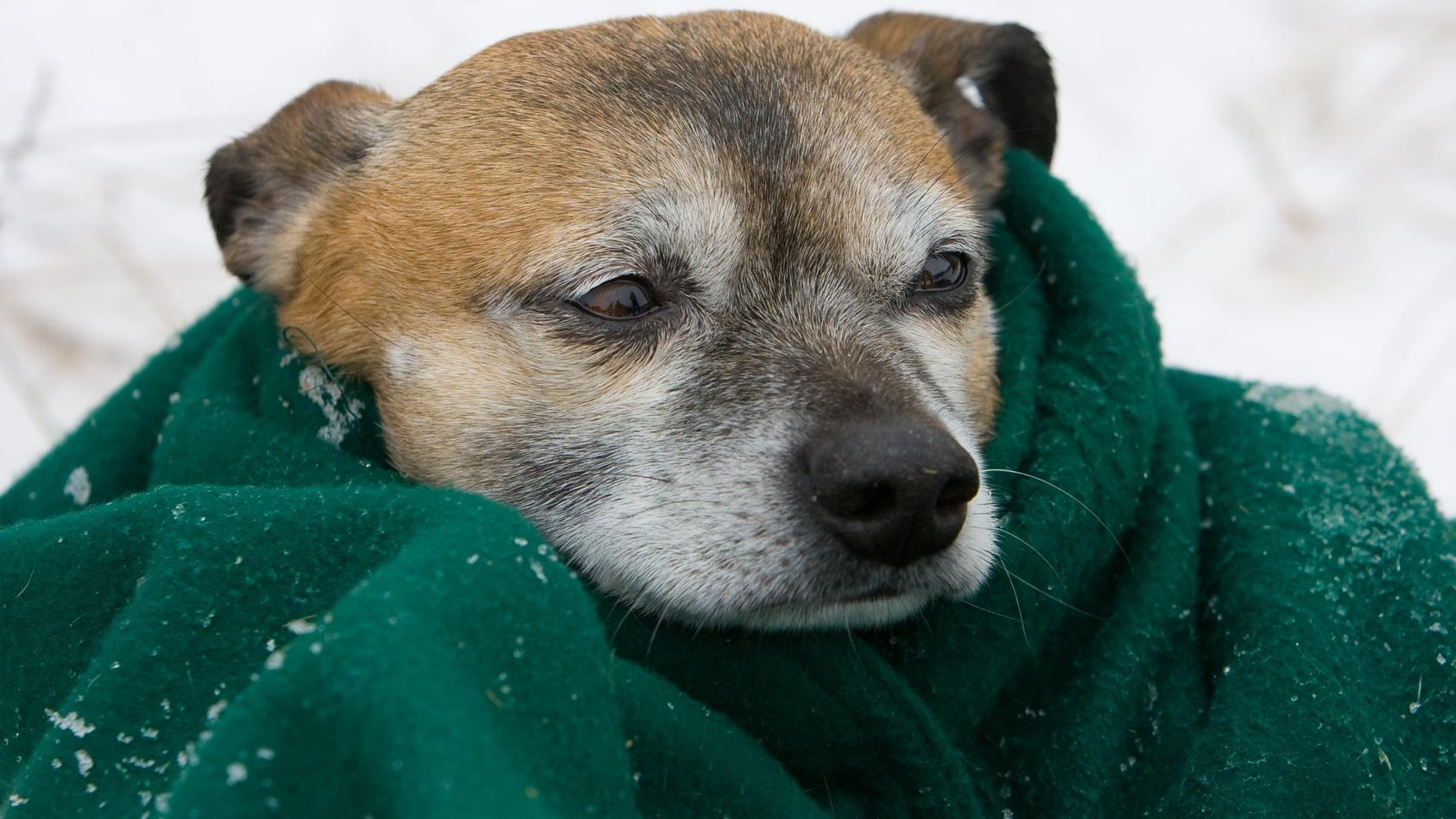 Auch unsere Haustiere können sich erkälten.