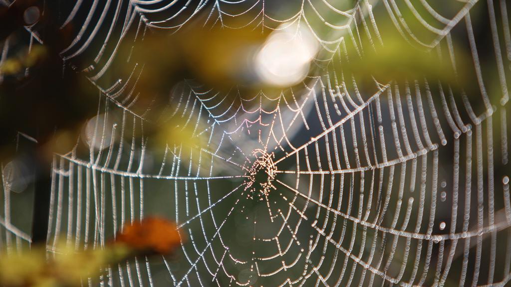 Ein Spinnennetz hängt am Dienstag (22.09.2009) an herbstlich gefärbten Blättern bei Ebenhofen (Schwaben). Altweibersommer mit Temperaturen zwischen 19 und 25 Grad herrscht derzeit in Bayern. Foto: Karl-Josef Hildenbrand dpa/lby +++(c) dpa - Bildfunk+