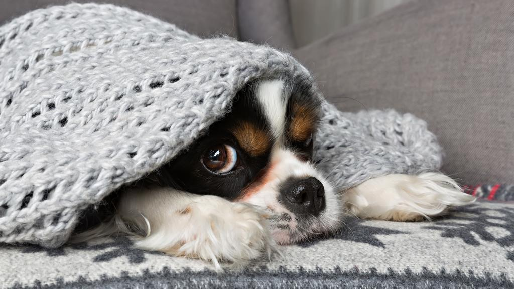 Süßer Hund unter grauer Wolldecke