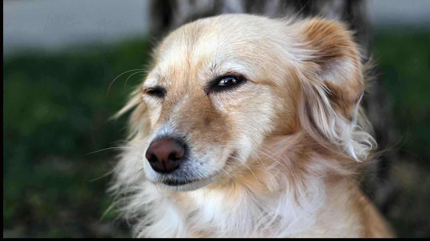 Ihr Hund zwinkert? Das kann dahinterstecken