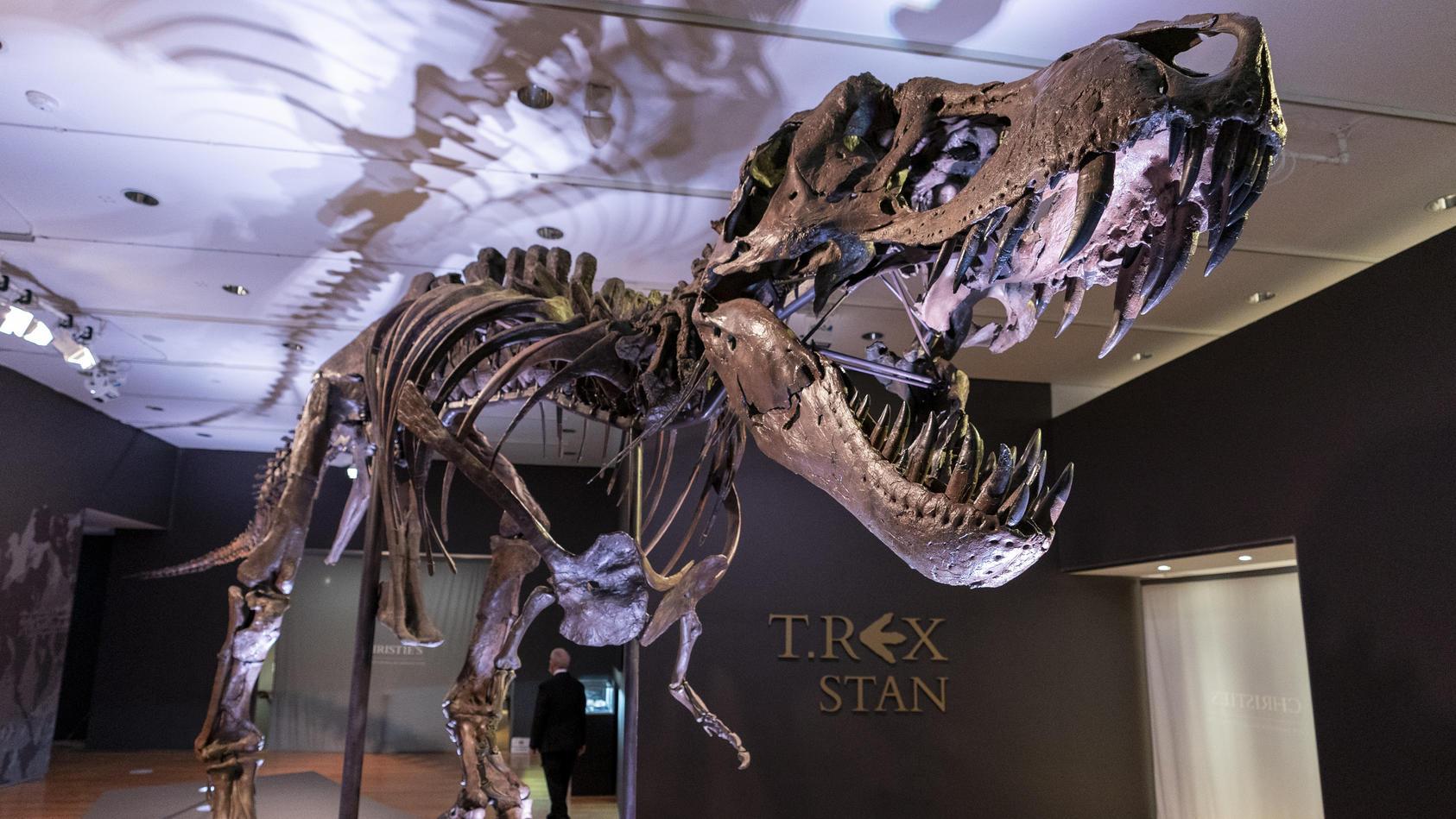 """Das rund 67 Millionen Jahre alte Dinosaurier-Skelett mit dem Spitznamen """"Stan""""gehöre zu den """"größten, komplettesten und am besten erforschten"""" seiner Art."""