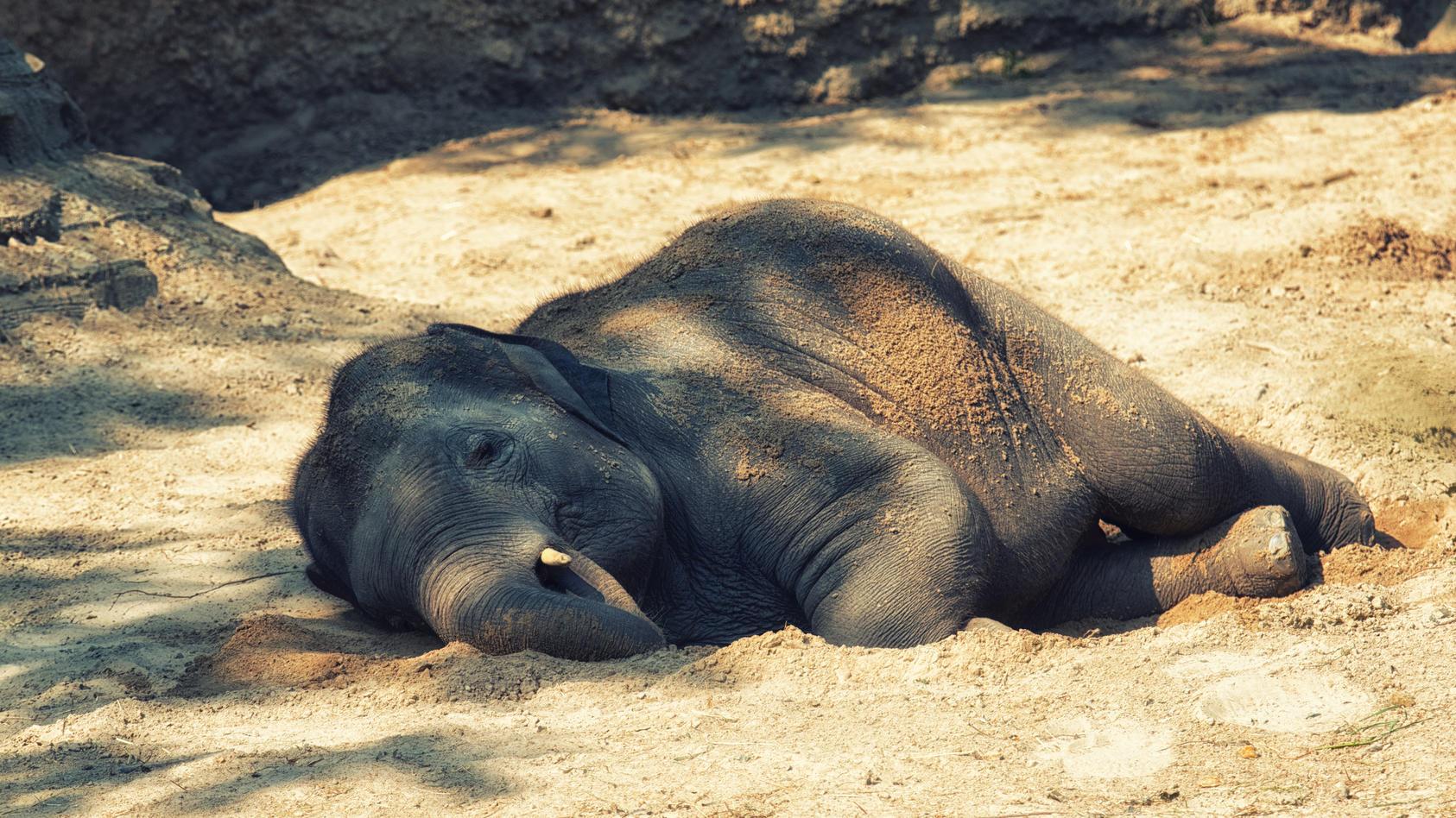 Warum sterben in Botsuana so viele Elefanten?
