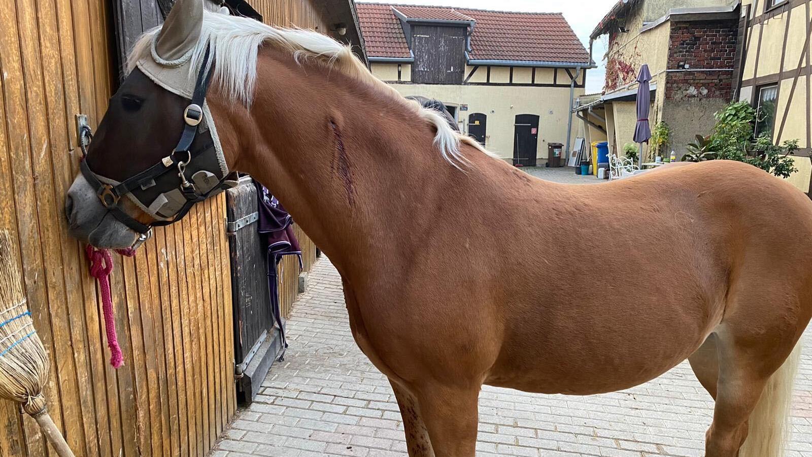 Tierhasser verletzten Pferde bei Jena.
