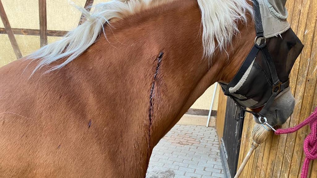 In den vergangenen Monaten wurden immer wieder Tiere im Umkreis der Stadt Jena verletzt.