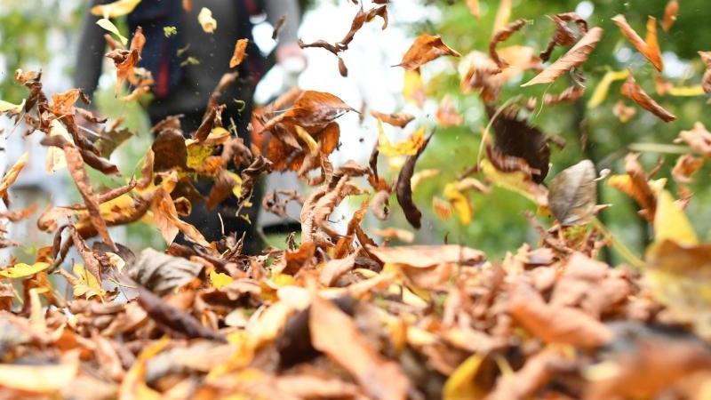 Laubsauger erleichtern zwar die Arbeit von Gartenbesitzern, dafür sind sie aber auch sehr laut und gefährlich für kleine Tiere. Foto: Ralf Hirschberger/dpa-Zentralbild/dpa-tmn