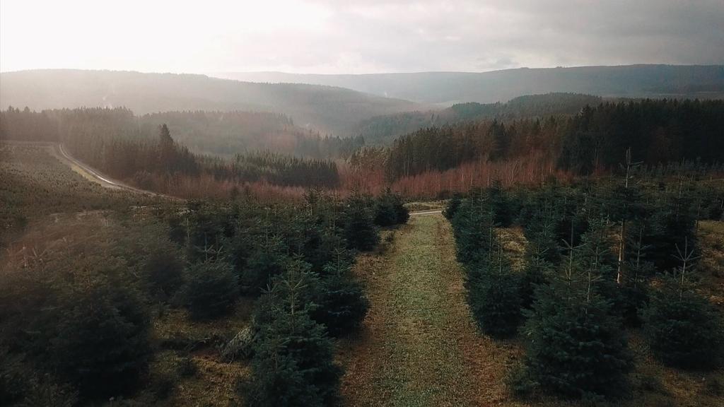 Weihnachten 2020: Dürre macht Adventskranz teurer