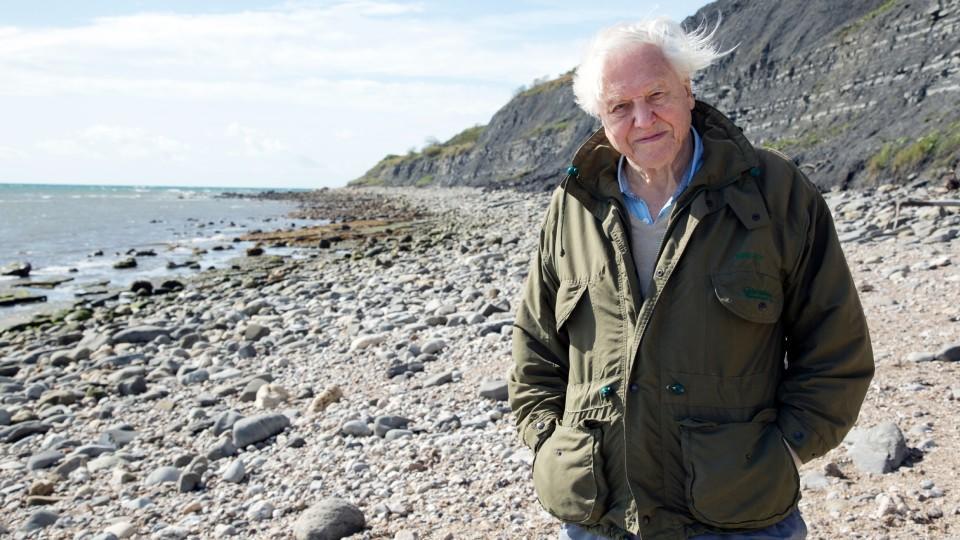 David Attenborough - mit 94 Jahren zum Social-Media-Star geworden.