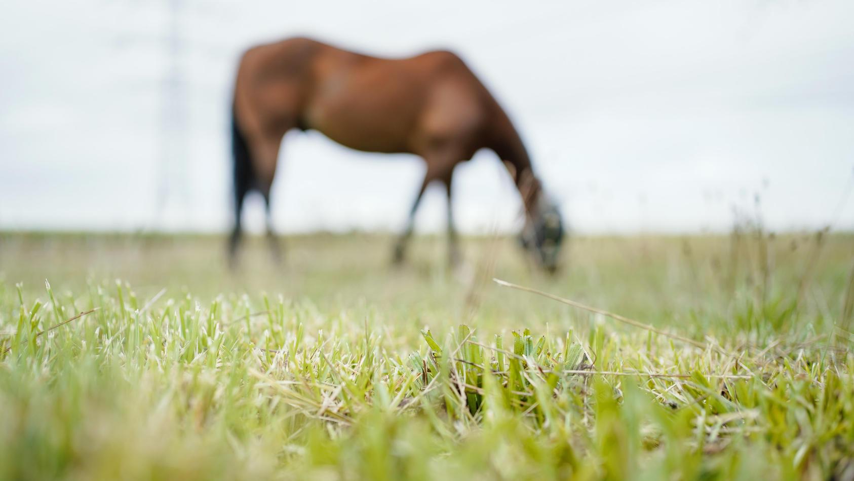 Pferd mit schweren Verletzungen tot auf Koppel entdeckt