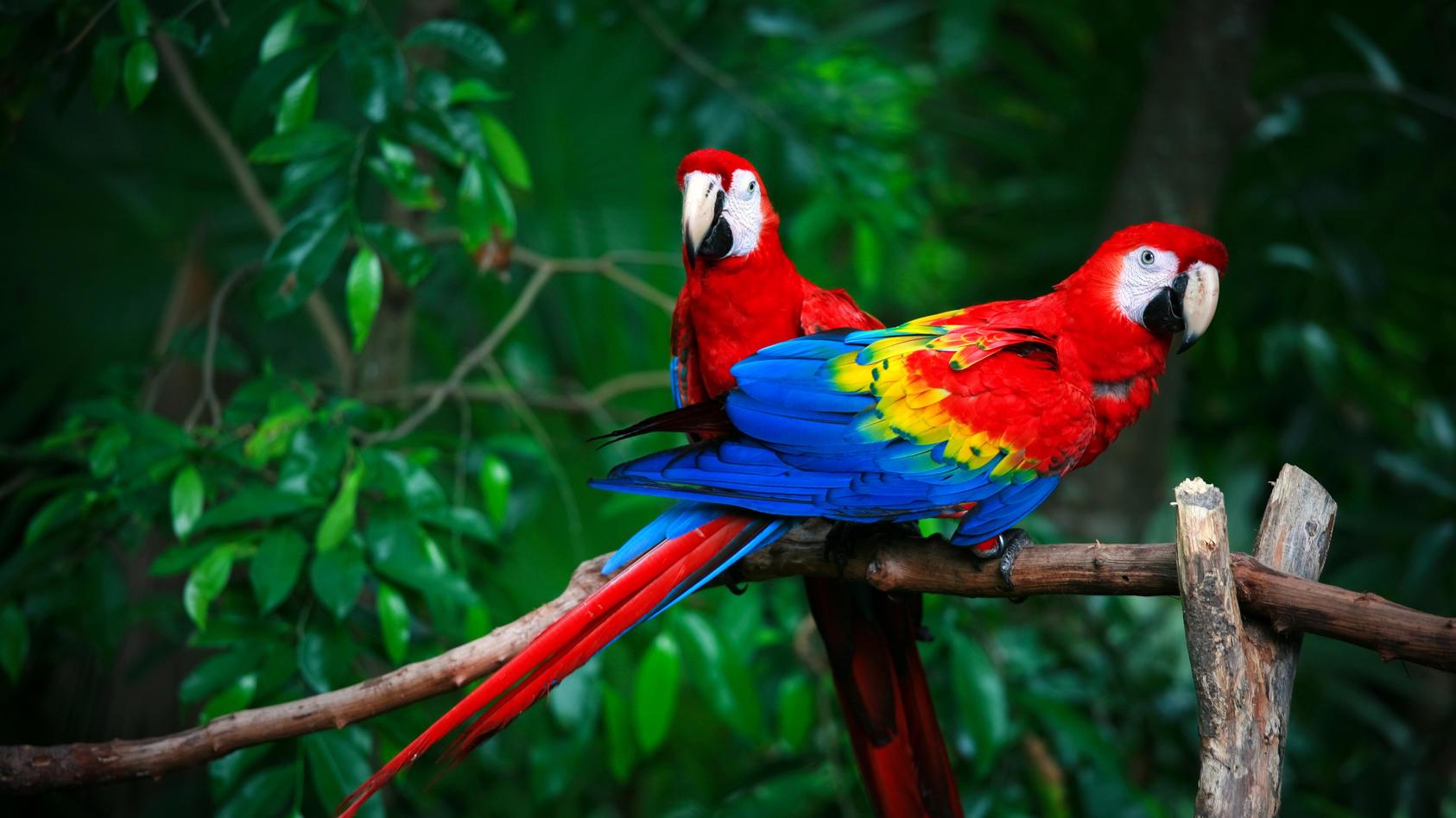 Symbolfoto: Papageie