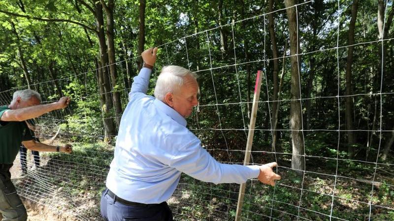 Till Backhaus (SPD), Agrarminister von Mecklenburg-Vorpommern, hilft beim Bau eines Wildschutzzauns. Foto: Bernd Wüstneck/dpa-Zentralbild/dpa/Archivbild