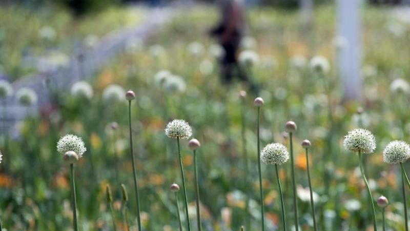 Besucher gehen über das Gelände der Landesgartenschau 2020. Foto: Federico Gambarini/dpa/Archivbild
