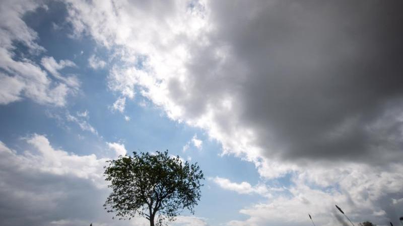 Dunkle Wolken ziehen am Himmel über einen Baum hinweg. Foto: Sina Schuldt/dpa/Symbolbild