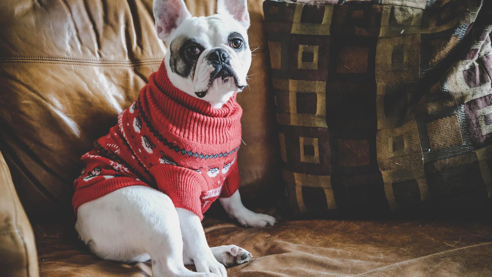Ist ein Winterpulli für Hunde wirklich nötig?