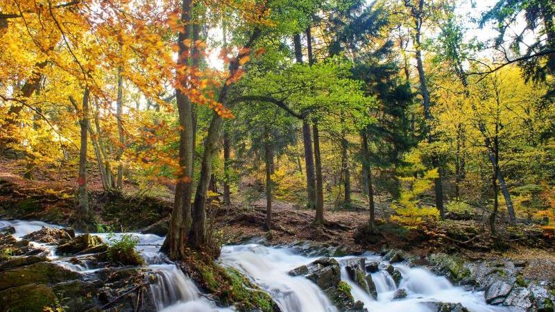 Das Wasser der Selke rauscht unter herbstlichen Bäumen über die Kaskaden des Selkefalls zu Tal. Foto: Klaus-Dietmar Gabbert/dpa-Zentralbild/ZB/Archivbild