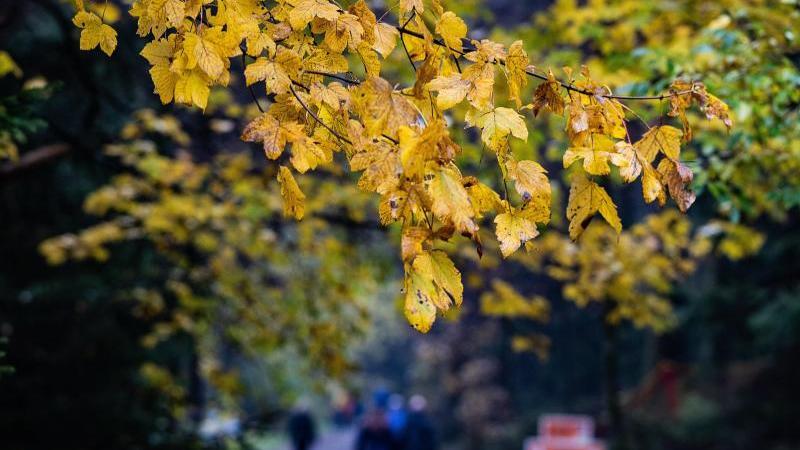 Passanten gehen an herbstlich gefärbten Bäumen vorbei. Foto: Swen Pförtner/dpa/Symbolbild