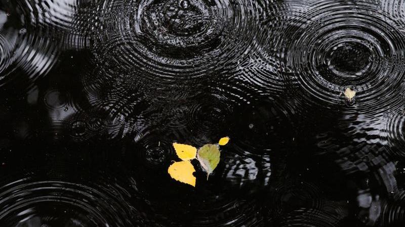 Regentropfen erzeugen Ringe auf der Wasseroberfläche eines Sees. Foto: Paul Zinken/dpa/Archivbild